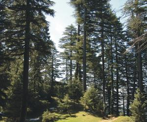 Kalatop and Khajiar Chamba Himachal Pradesh